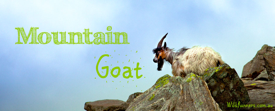 Mountain Goat Runners - Hill & Strength Training