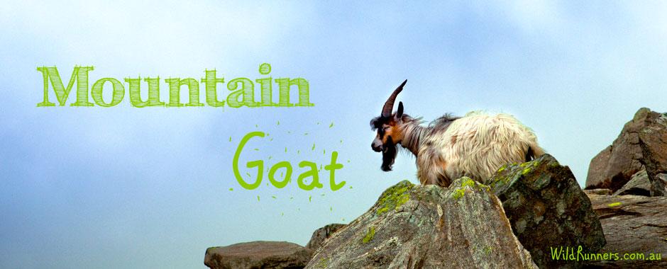 Mountain Goat Runners - Hill & Strength Training