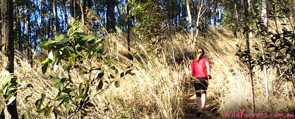 Trail Run Training Sessions - Brisbane